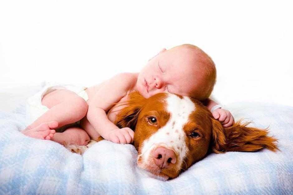llegada-bebe-a-casa-perro