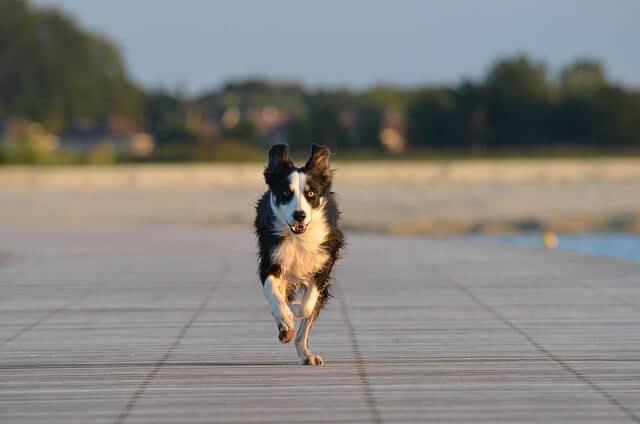 noblecan-perro-acude-llamada