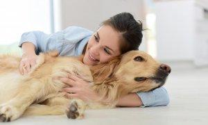 noblecan-como-calmar-perro